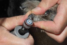 Nature de cheval communiquer - Peut on couper les ongles des chiens ...